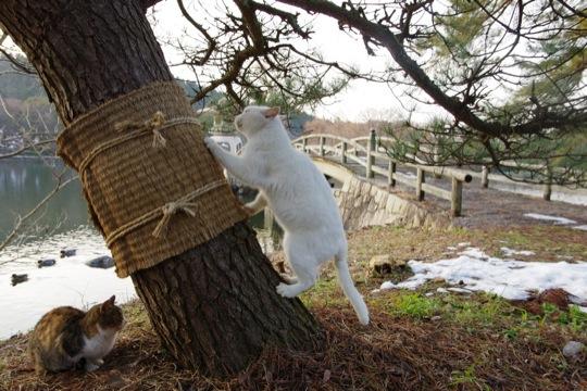 腹がよじれるおもしろ猫画像15選!!