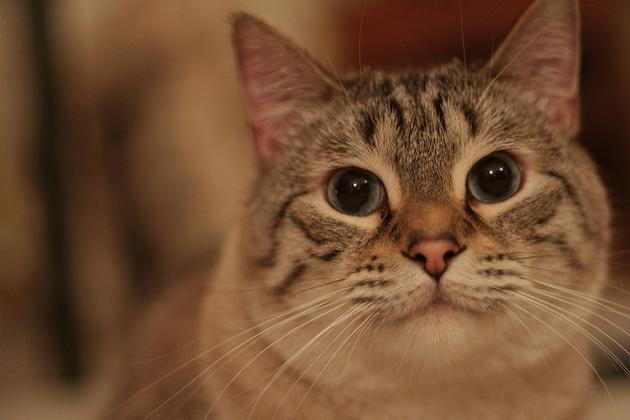 うにゃんと甘えん坊サバトラが集まる、猫画像20選!!