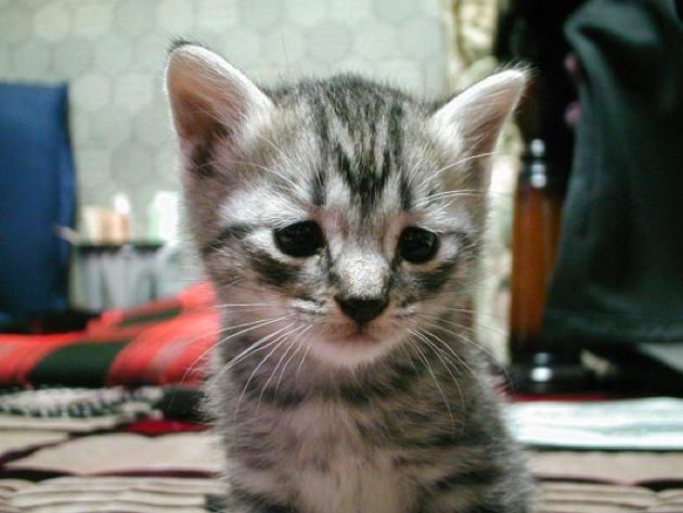 子猫の画像をみてたっぶりと癒される☆猫画像16選!!