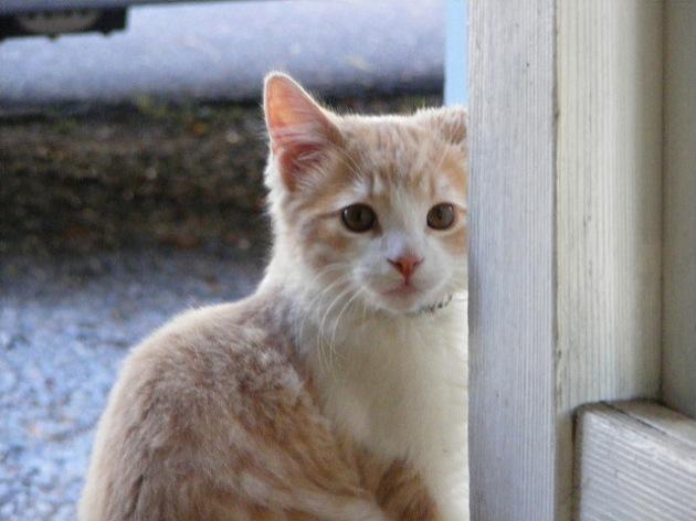 あなた猫ちゃんなんて〜の? 猫の名前ランキング
