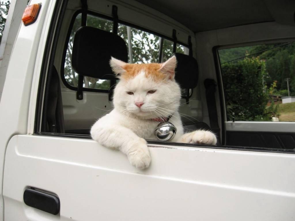 吹き出しそうになる、面白画像☆猫22選!!