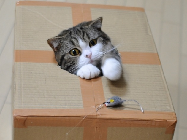 やたらとしぐさが可愛い猫画像22選!!
