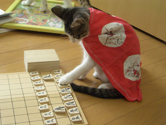 ホントにネコか??と疑いたくなるような、頭のいい猫、猫画像☆