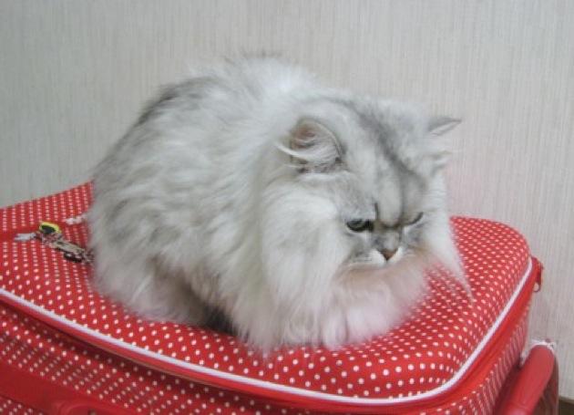 思わずモフモフしたくなる・ふわふわ猫画像22選!!