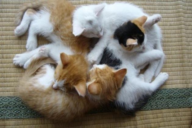 思わず抱きしめたくなる・超可愛い猫画像18選!!