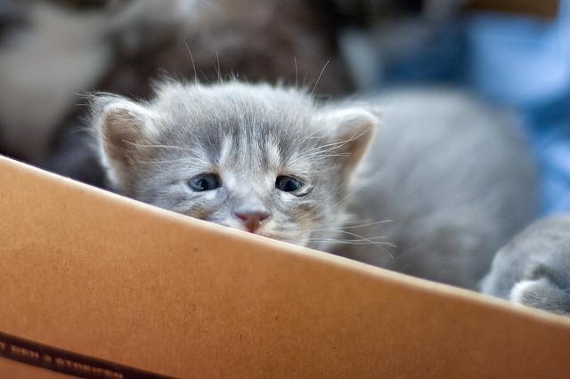 思わず猫の気持ちが理解出来てしまう、切ない猫画像22選!!