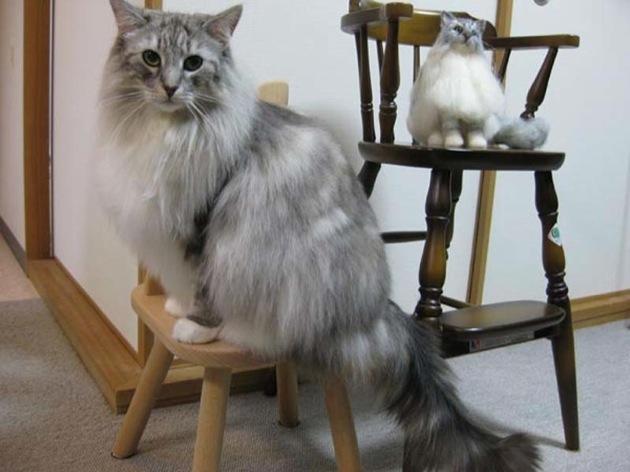 ノルウェージャンフォレストキャットがもっふもふな猫画像22選!!