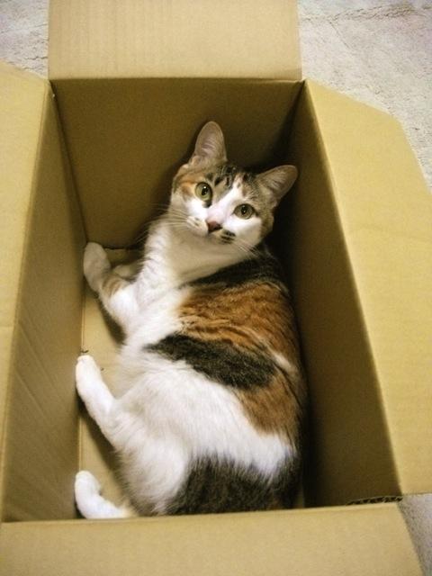 三毛猫がやたらと可愛い猫画像22選!!