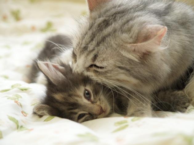 抱きしめたくなるくらい可愛い、子猫画像18選!!
