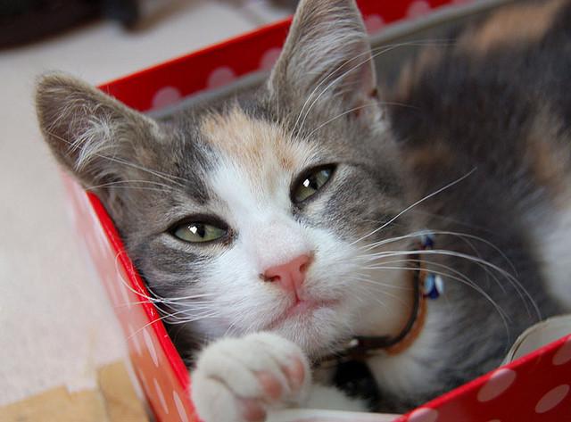 思わず「ぎゅっ」ってしたくなる☆かわいい 猫 写真集!!