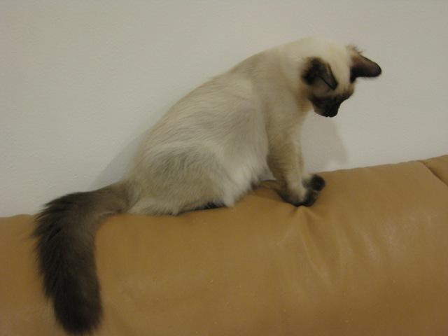 ねこのしっぽがとってもキュートな猫画像22選☆