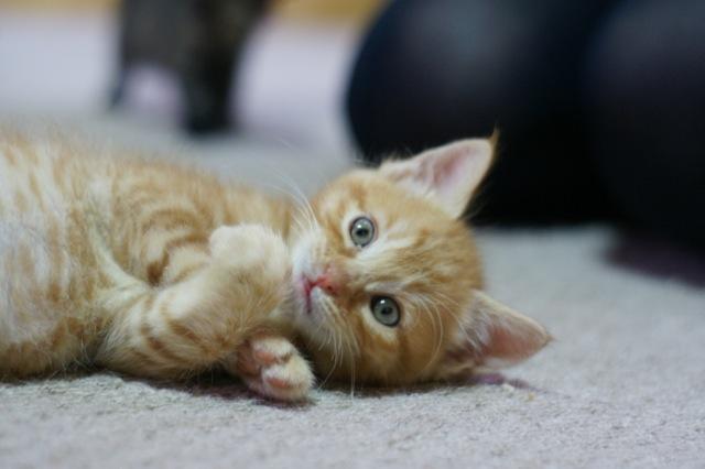 こねこがやたらと可愛い☆癒しの猫画像22選!!