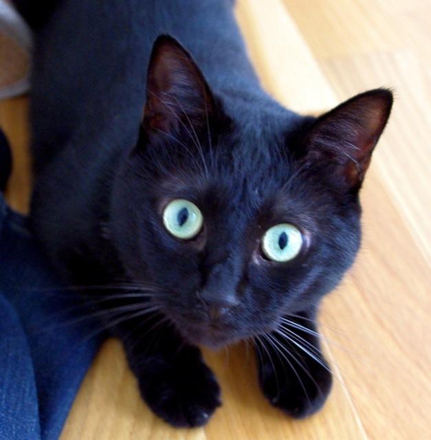 クールビューティーな黒猫画像22選!!