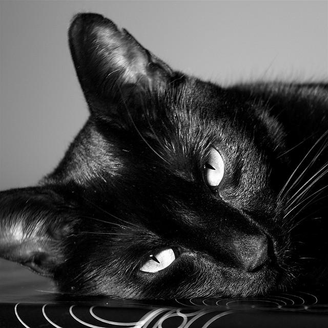 黒猫って、かわいい♪驚きの猫画像22選!!