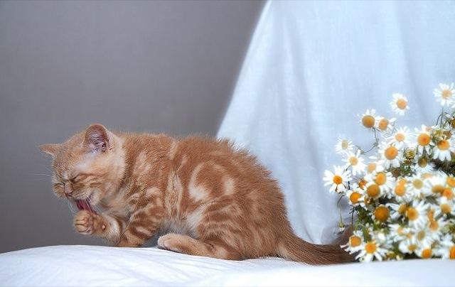 思わずもふもふしたくなる、ふわふわな猫画像18選☆