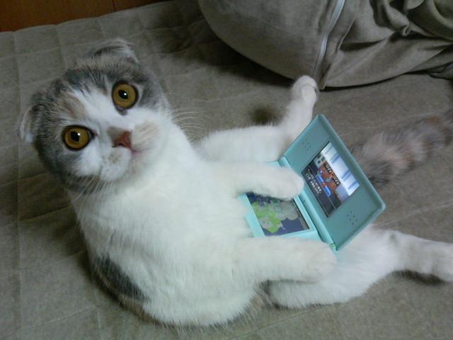 こいつはマジヤバい!!おもしろ猫画像18選!!