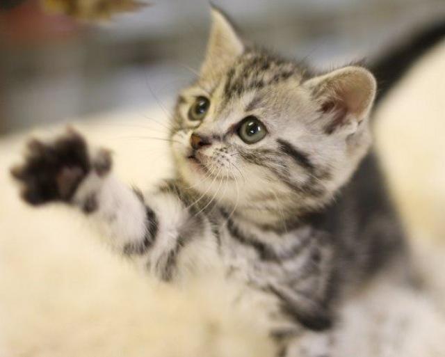 めちゃくちゃ可愛い猫画像18選!!