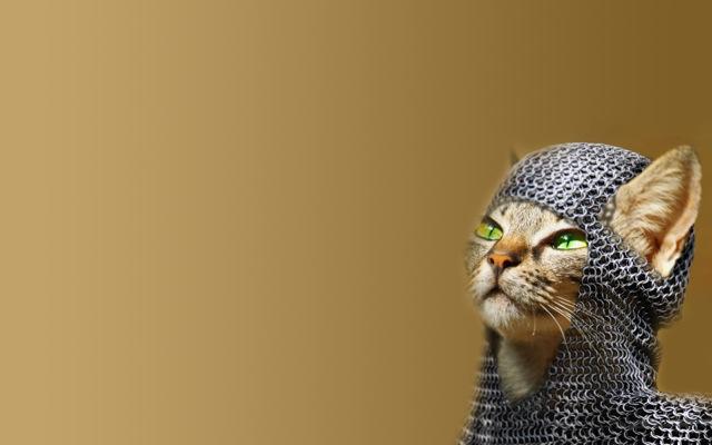 イケてる猫たちの、おもしろ画像20選!!
