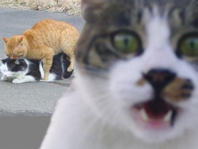 マジでやばい!おもしろ猫画像18選☆