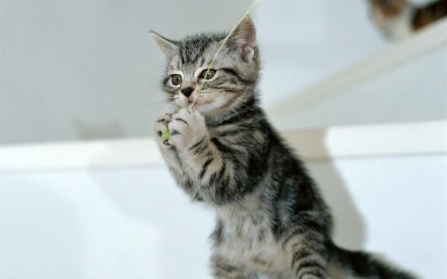 なんだかんだで癒される、子猫の画像22選!!