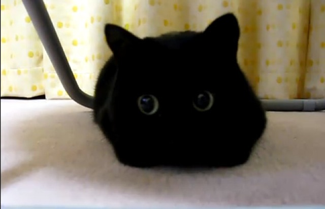 黒猫がかわいい☆究極の猫画像18選!!
