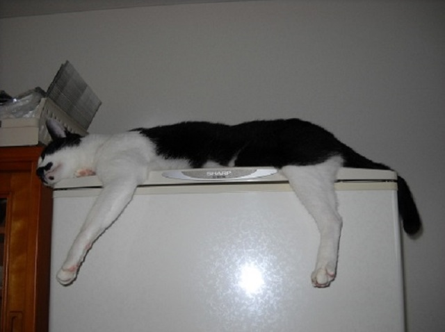 猫のおもしろい仕草を集めた・究極の猫画像22選!!