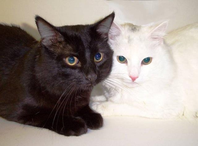 見ているだけで心が和む・癒しの猫画像22選!!