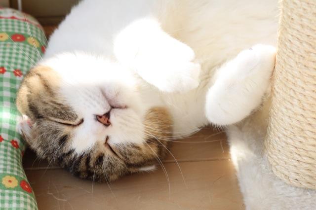 可愛い猫が集まる猫画像22選!!