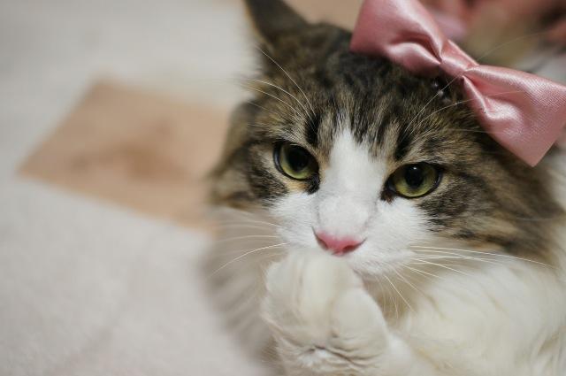 猫なのにとってもおしゃれな猫画像22選!!