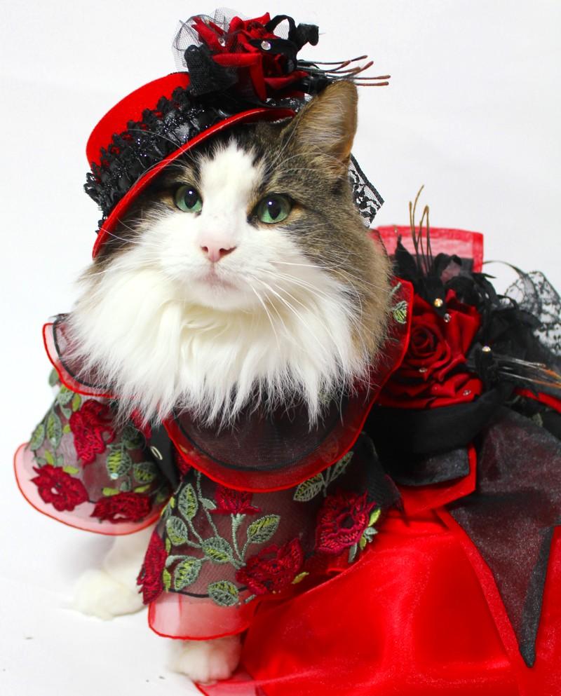 思わず振り返って見てしまう?超絶美人な猫画像!!