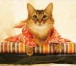 めちゃくちゃ可愛い☆子猫の画像22選♪