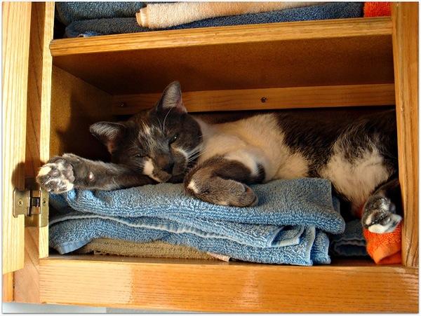 マジか?と目を疑いたくなるような、猫のおもしろ画像22選!!