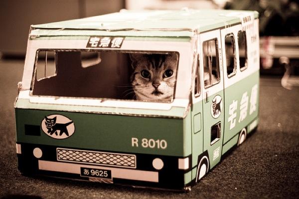 おもわず吹き出しそうになる・おもしろ猫画像22選!!