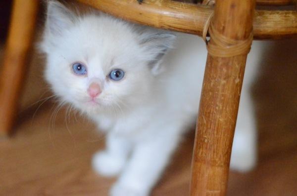 cat(22)