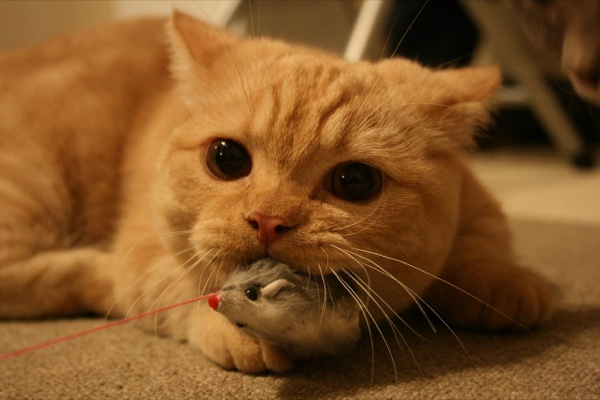 cat (15)