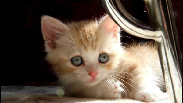 cat (18)