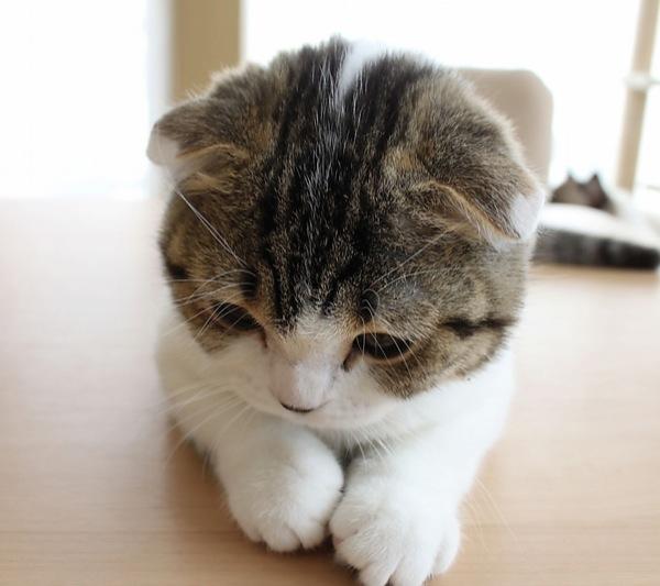 cat (19)