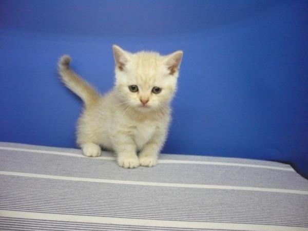cat (22)