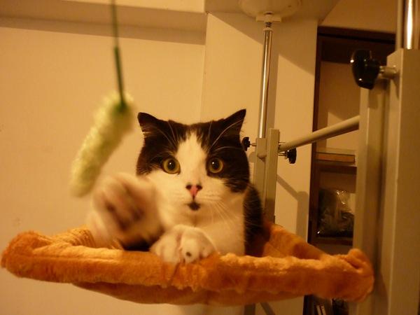 cat (3)