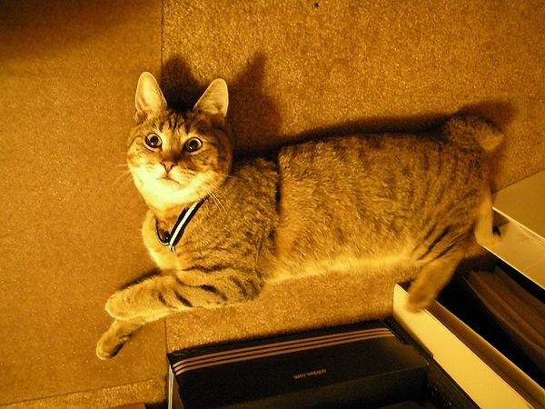 cat(10)
