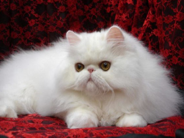 cat(11)