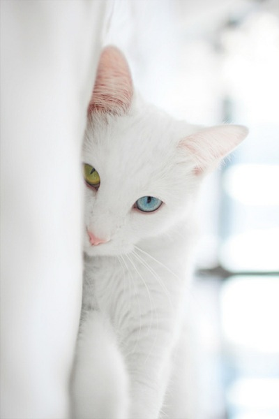 cat(13)