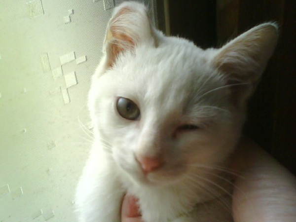 cat(15)