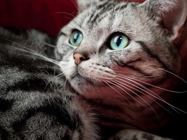 ヤバい可愛い、猫図鑑な猫画像18選!!