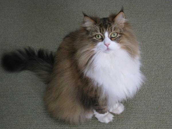 cat(16)