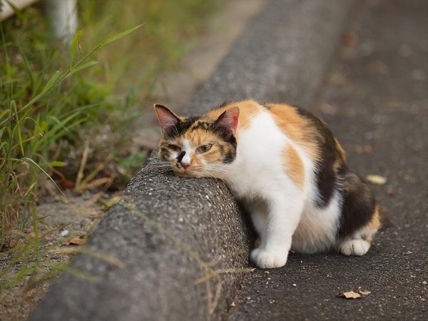 ずっと眺めていたくなる・かわいい猫の写真集☆