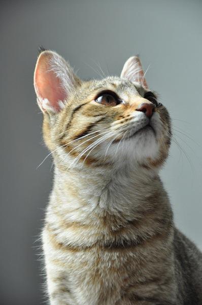 cat(18)