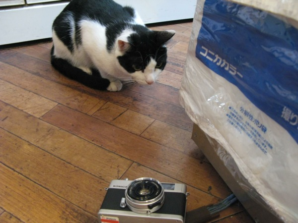 cat(19)