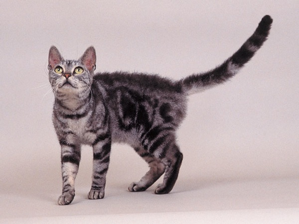 cat(2)