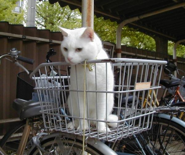 cat(3)